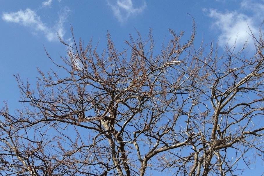 amla strom